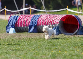 Agility and Activities